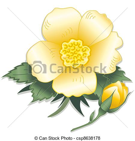 Vector of Wild Yellow Rose Flower.