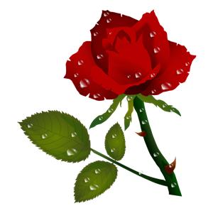 Rosa Vermelha Red Rose clipart, cliparts of Rosa Vermelha.