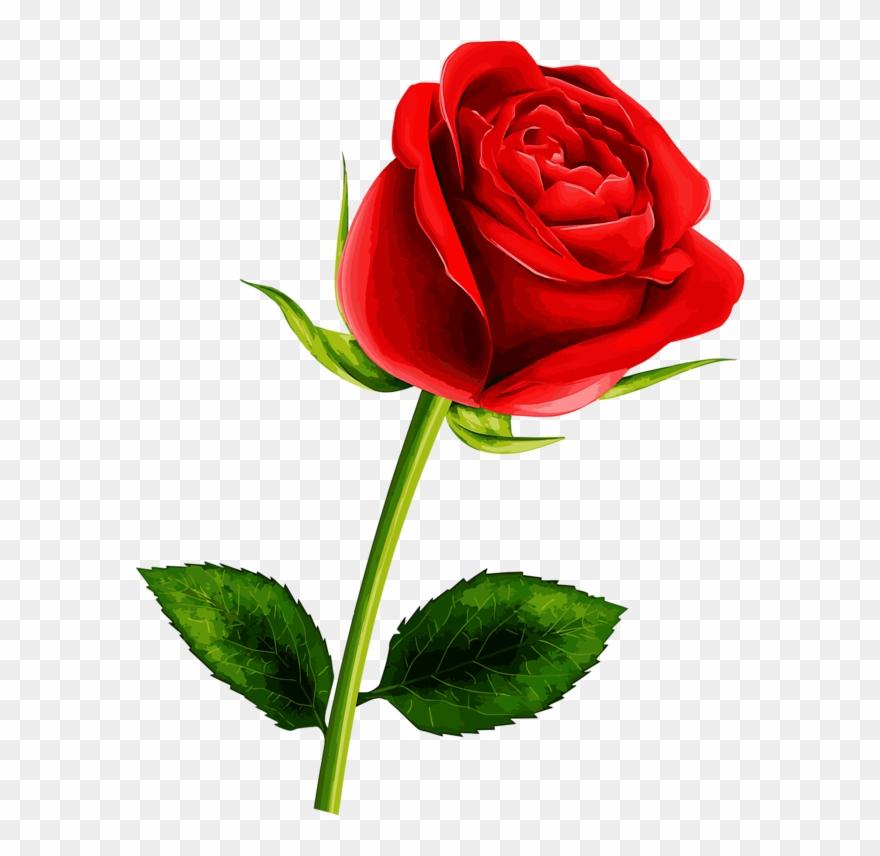 Soledad Red Flowers, Pretty Flowers, Red Roses, Single.