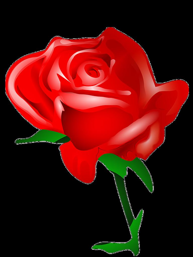 Rosa vermelha png 2 » PNG Image.