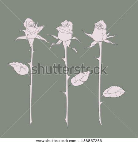 Rosaceae Juss Stock Vectors & Vector Clip Art.