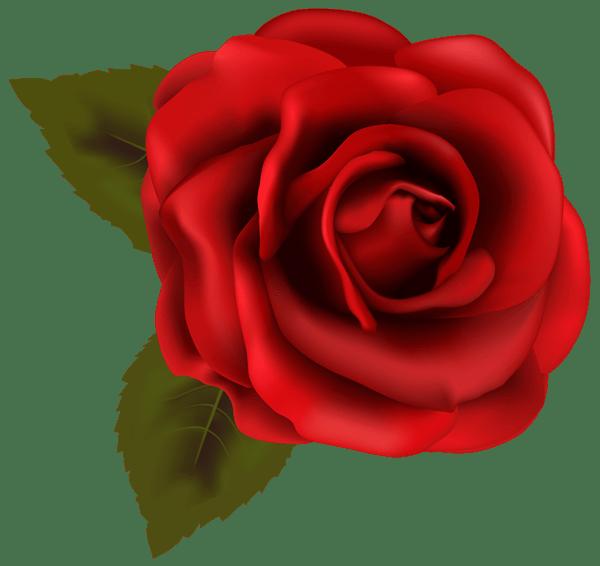 Rosas clipart 1 » Clipart Portal.