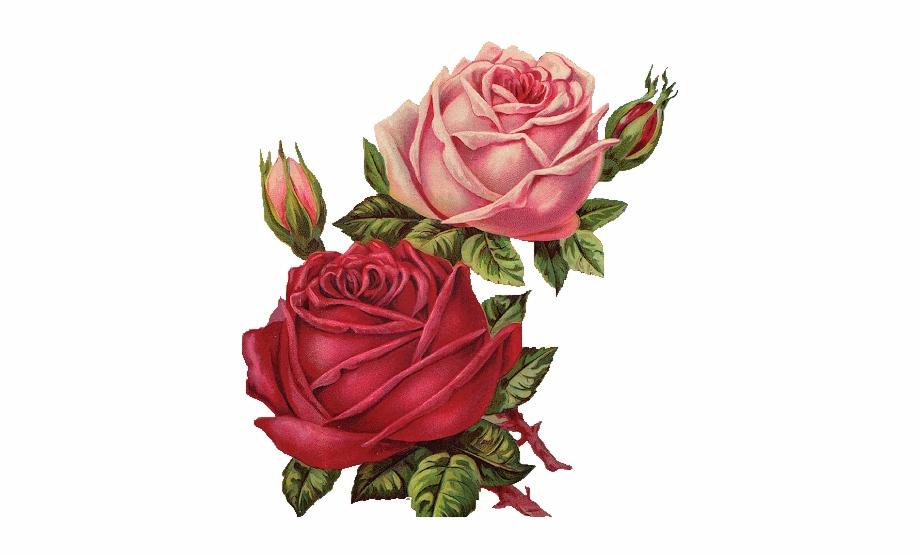 flower #rosa #flowers #rosas #recurso #sticker #png.
