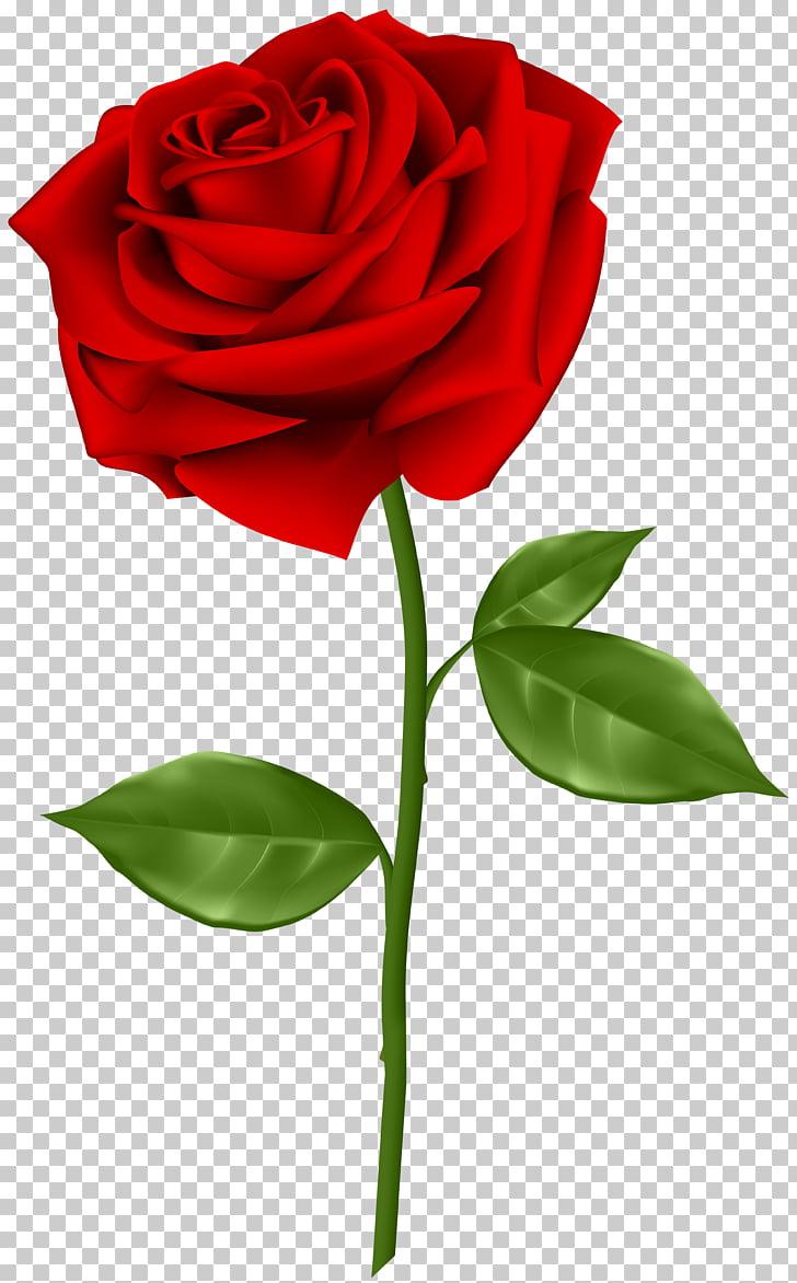 Rosa roja ilustración, rosa azul, rosa roja PNG Clipart.