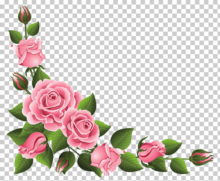 Rosa chinensis flor rosa rosa PNG Clipart.