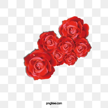 Red Roses Png, Vector, PSD, and Clipart With Transparent.
