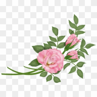 Roses Vector PNG Images, Free Transparent Image Download.