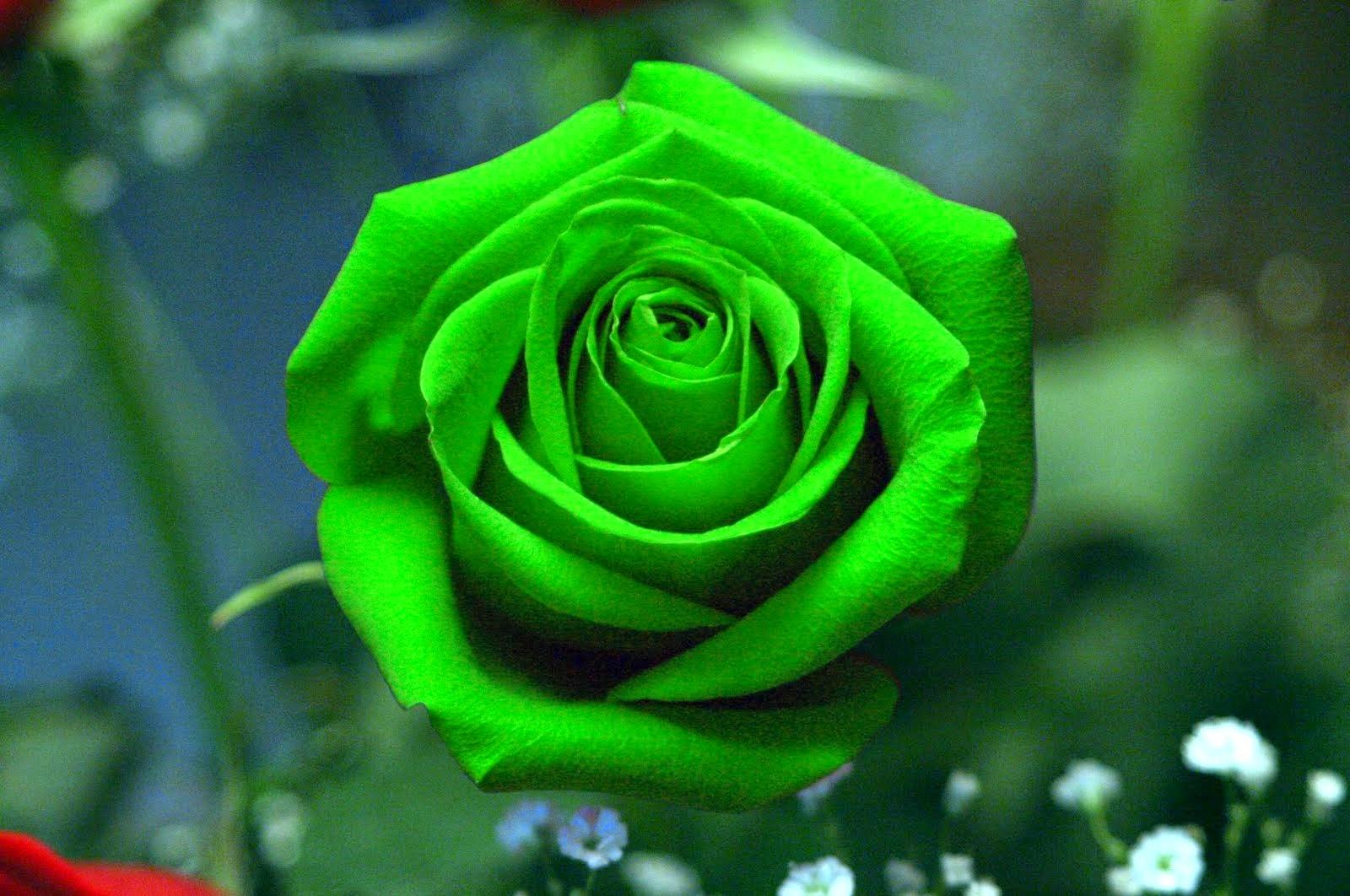 Imagenes Gifs: Rosas Verdes.