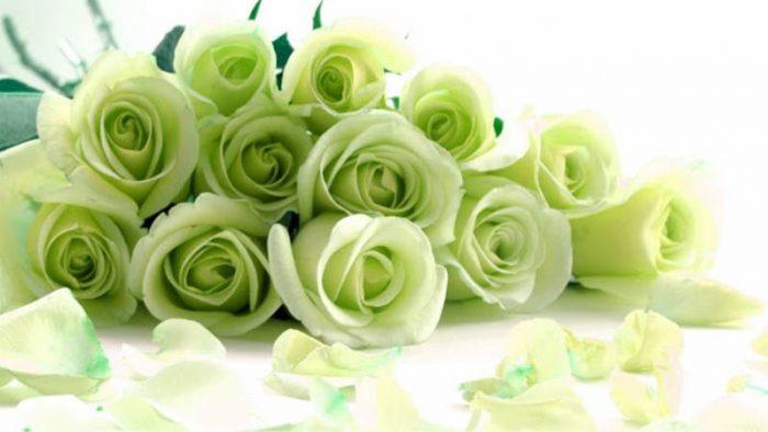 ▷ Significado de las ROSAS VERDES más hermosas del mundo.