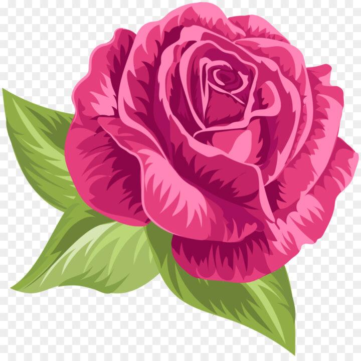 Garden Roses Cabbage Rose Floribunda Clip Art Pink Vintage.