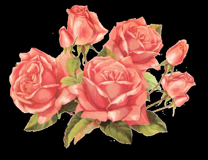 Flores Vintage Rosa Png Vector, Clipart, PSD.