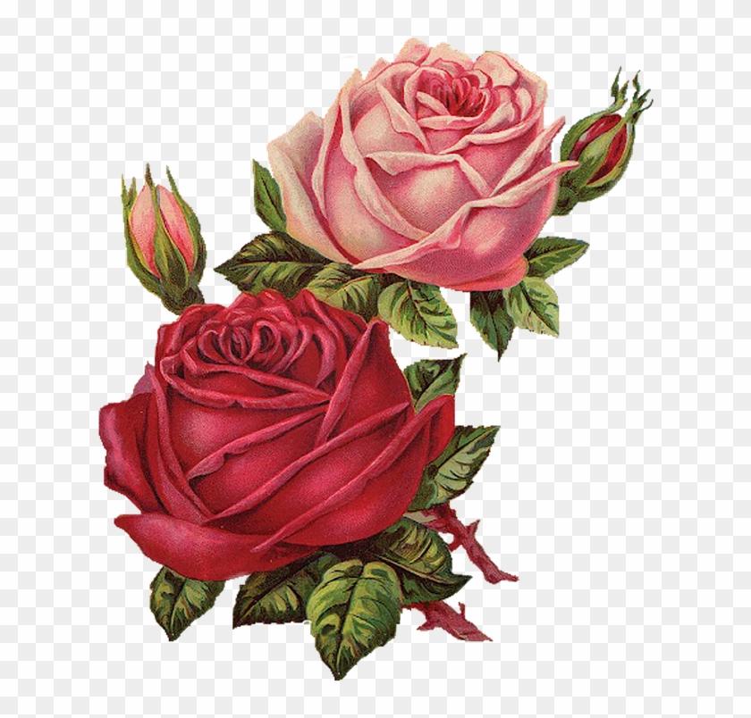 flower Flowers #flores #vintage #flor #rosa #rosespink.