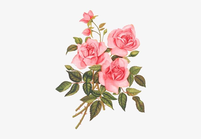 Rose Rose Paintings, Watercolor Flowers, Flower Art,.