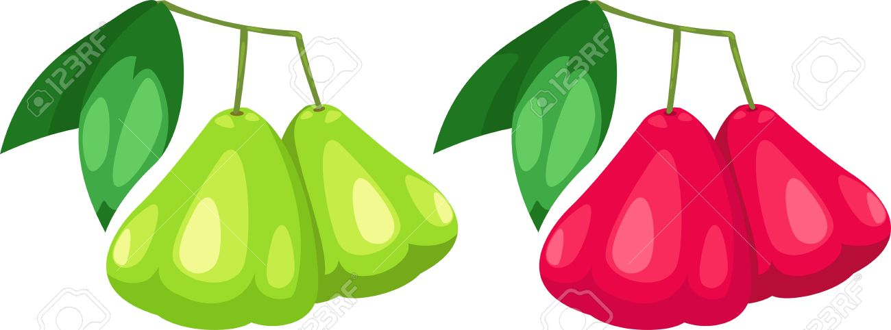901 Rose Apple Stock Vector Illustration And Royalty Free Rose.
