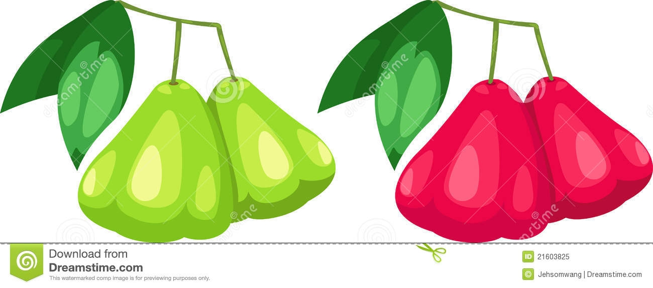 Rose apple clipart.