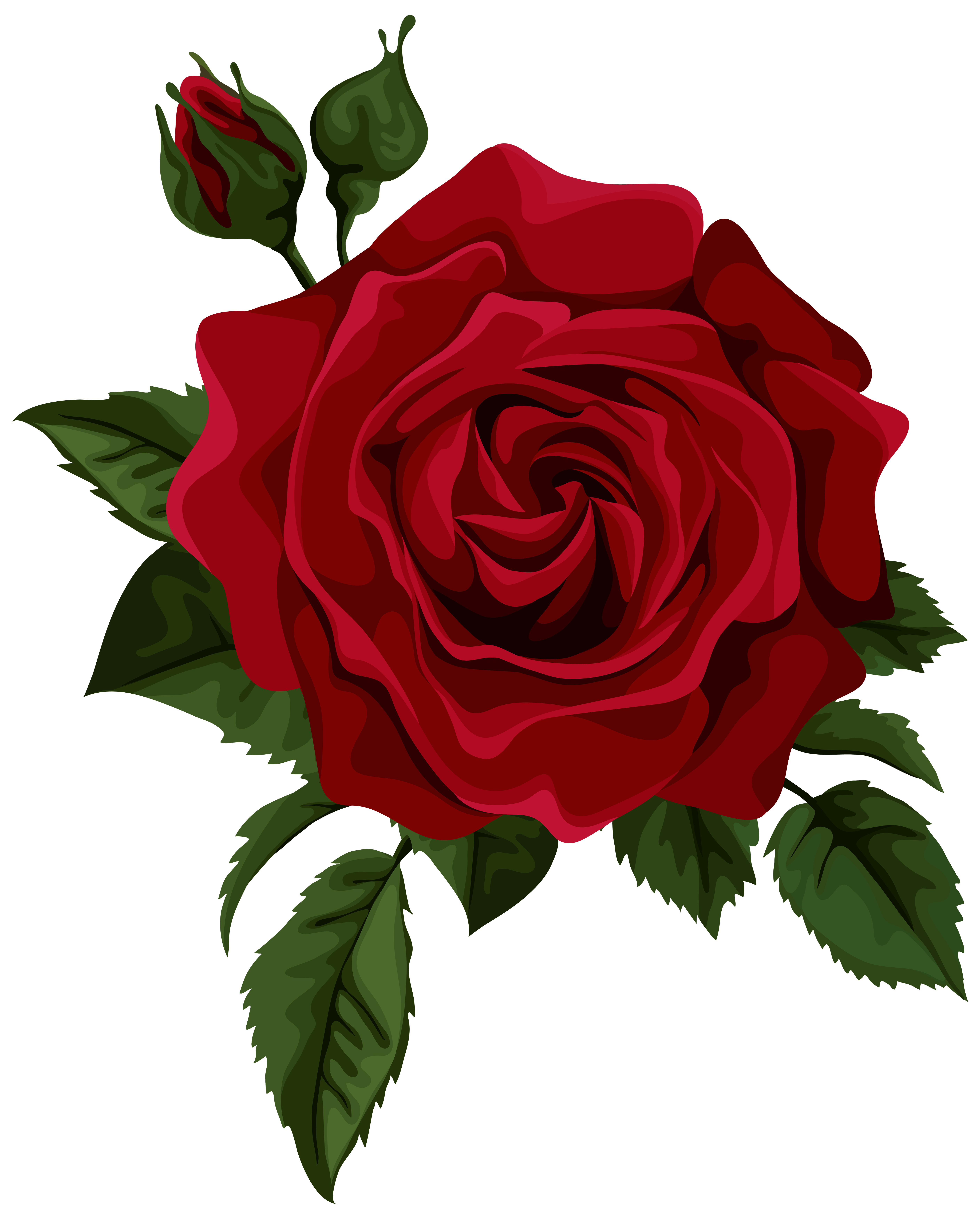Roses red rose with bud transparent clip art picture.