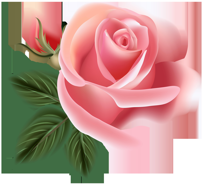 Pink Rose Clip Art PNG Image.