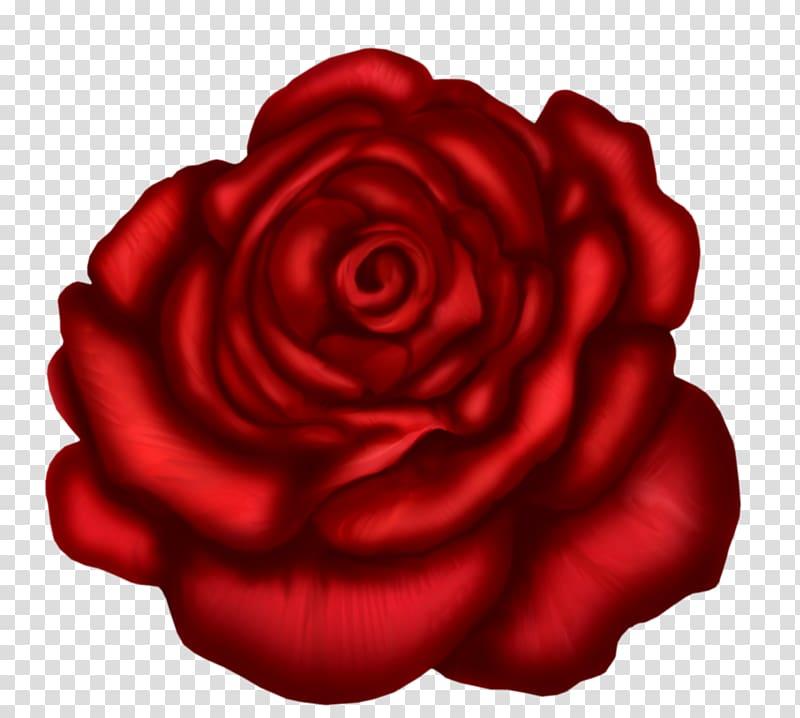 Red rose , Rose Red , Red Rose Art transparent background.