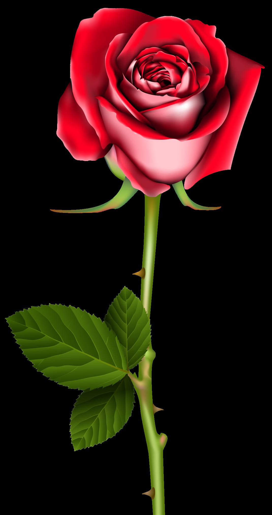 Rose PNG Clip Art.