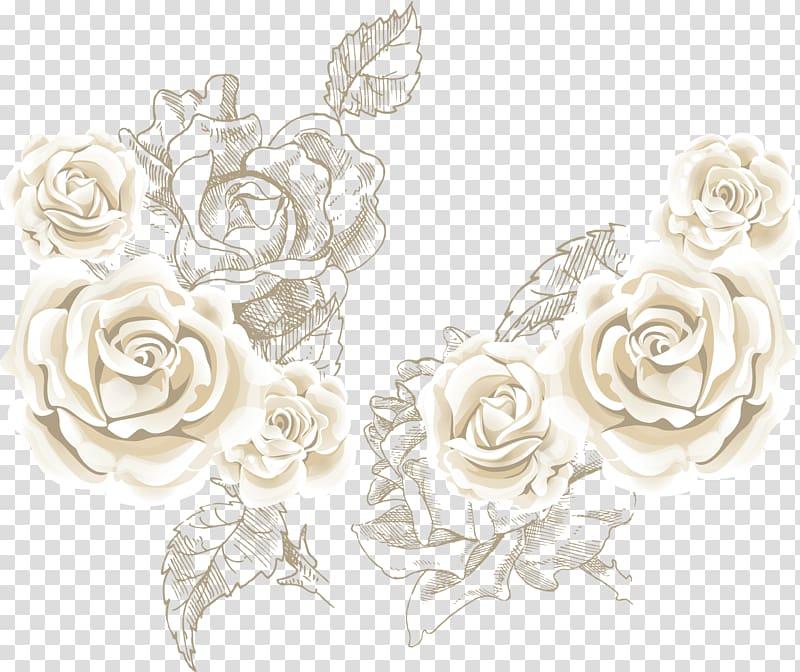 Beach rose Flower , White roses roses background sea, white.