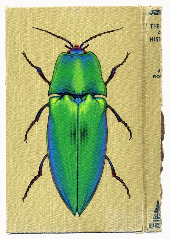 1000+ images about Clipart insects on Pinterest.