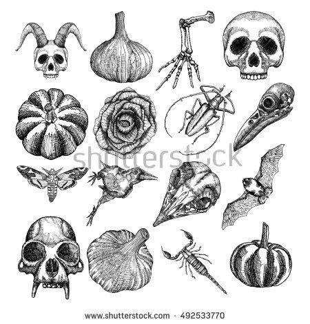 Dead Bug Stock Vectors, Images & Vector Art.