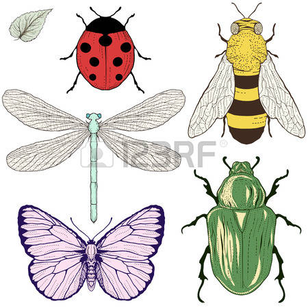 Rose Beetle Stock Photos Images. Royalty Free Rose Beetle Images.