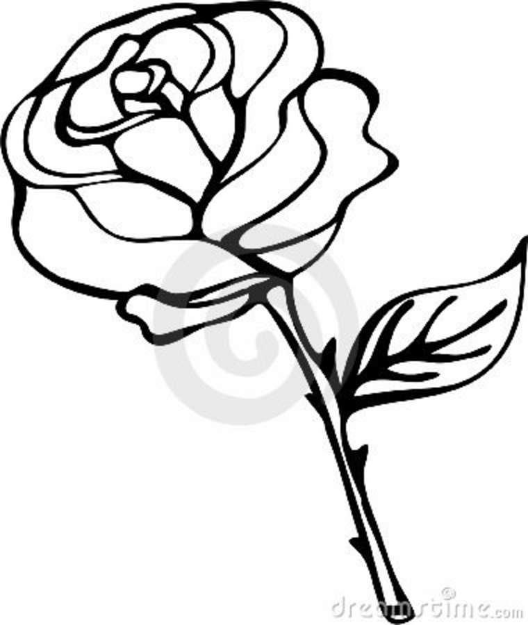 Free Black And White Rose Drawings, Download Free Clip Art.