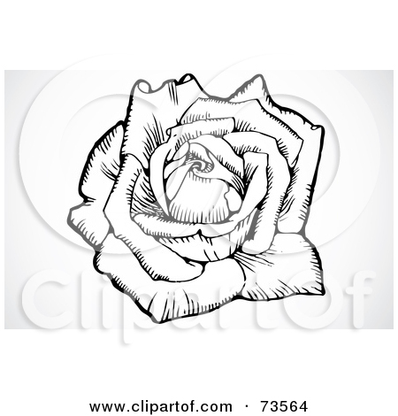 Royalty Free Rose Illustrations by BestVector Page 2.
