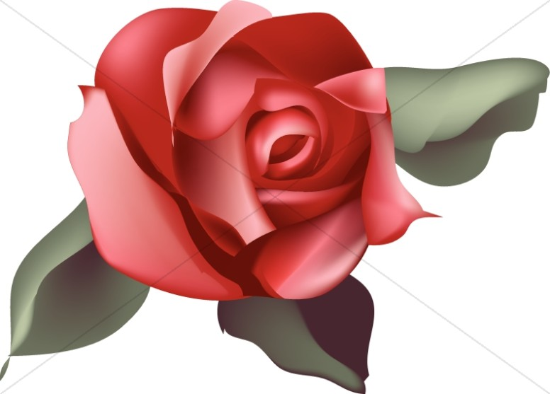 Single Red Rose Blossom #wjcKRU.