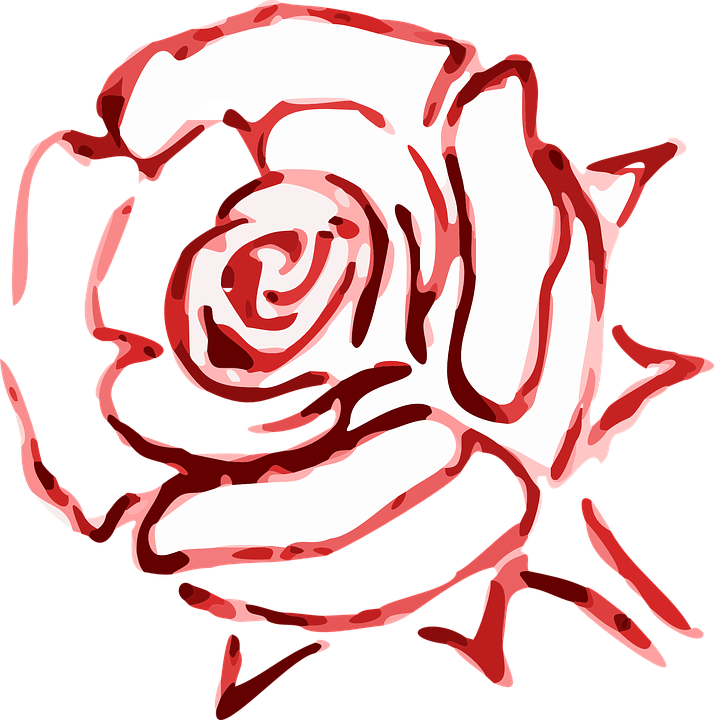 Free vector graphic: Rose, Blossom, Flower.