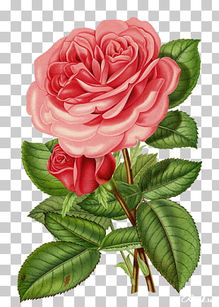 80 rose Bowl PNG cliparts for free download.
