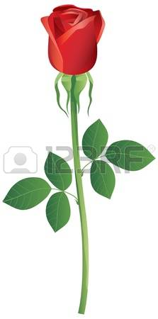 14,797 Rose Bud Cliparts, Stock Vector And Royalty Free Rose Bud.