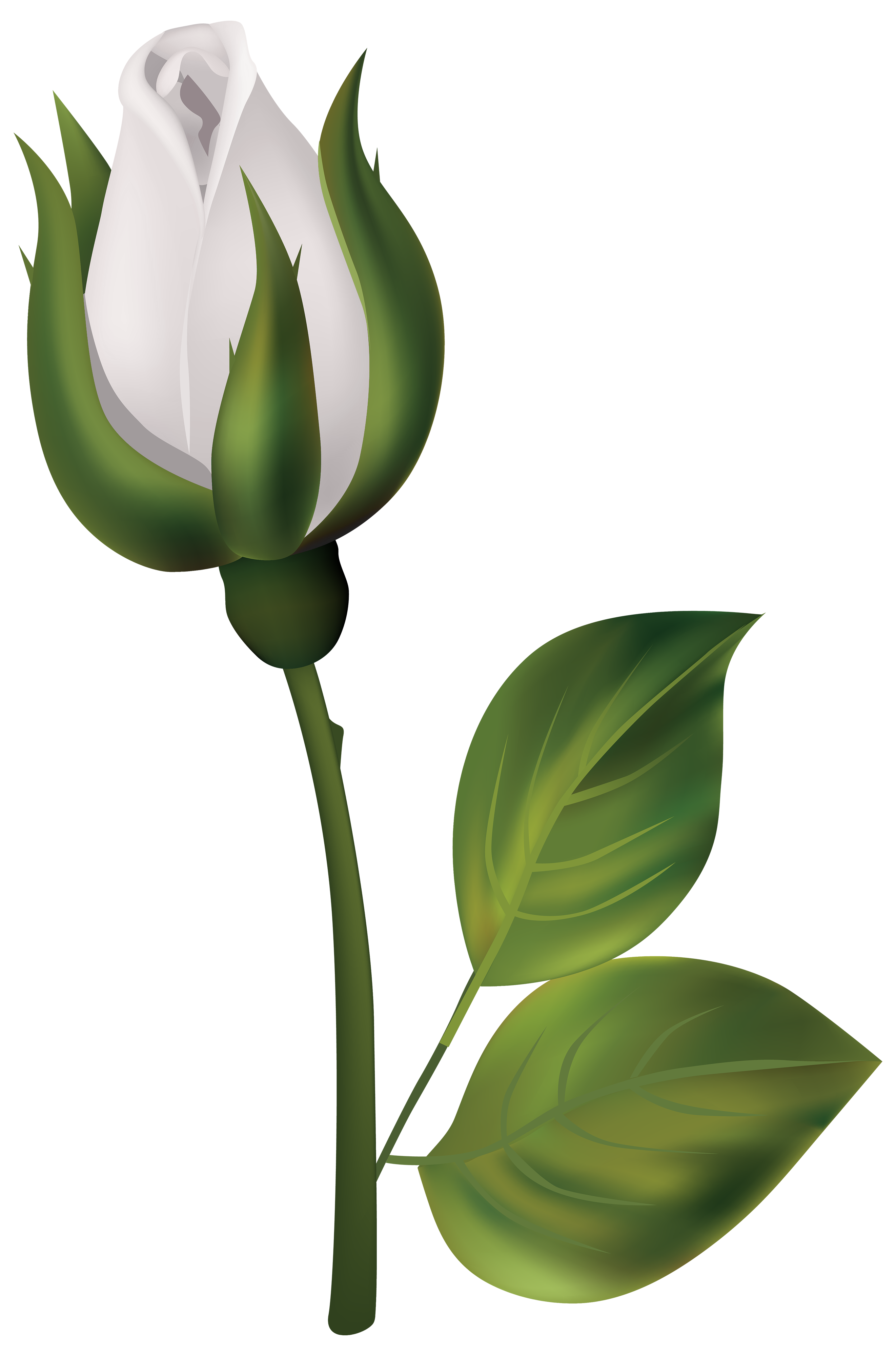 White Rose Bud PNG Clipart.