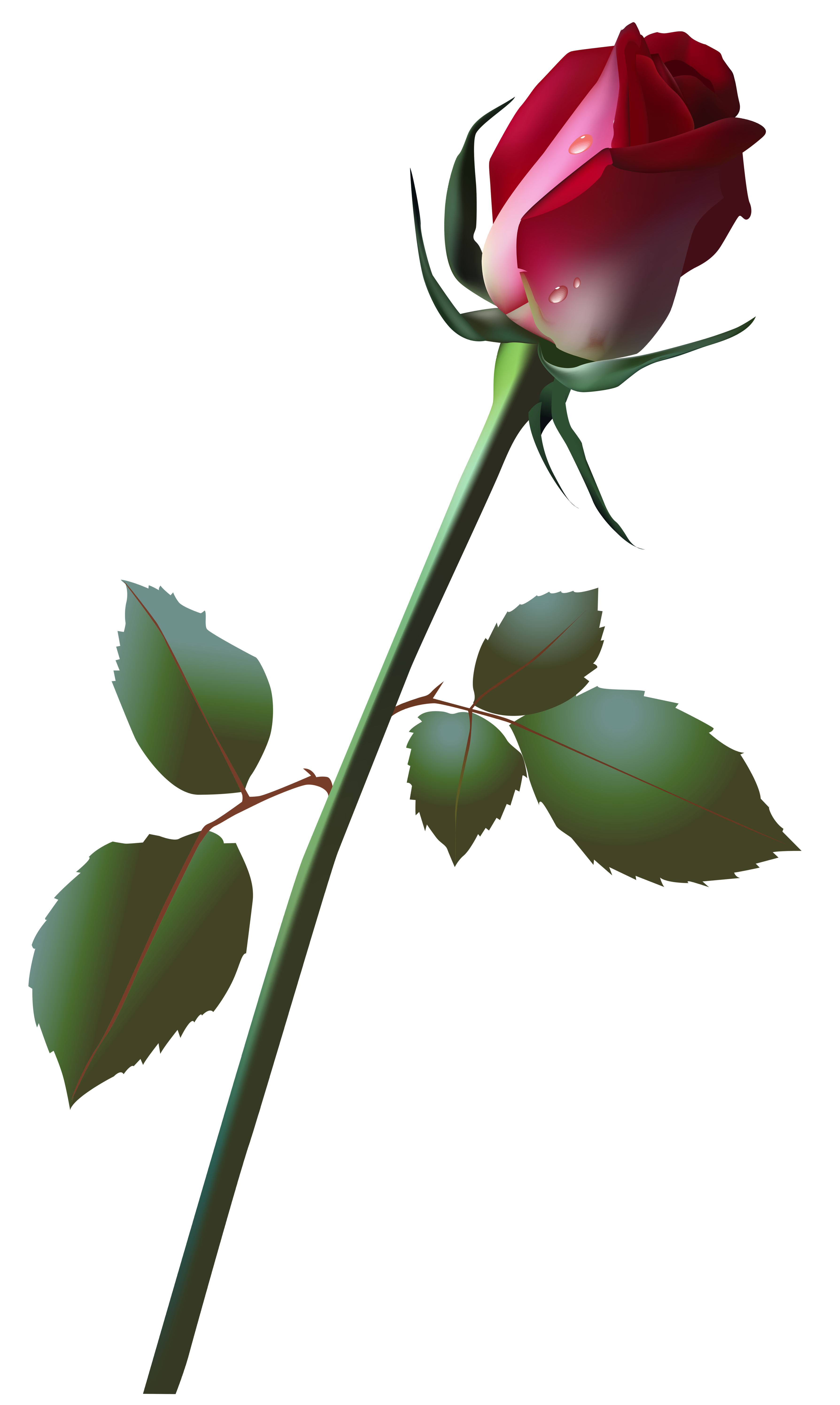 Beautiful Rose Bud PNG Clip Art Image.
