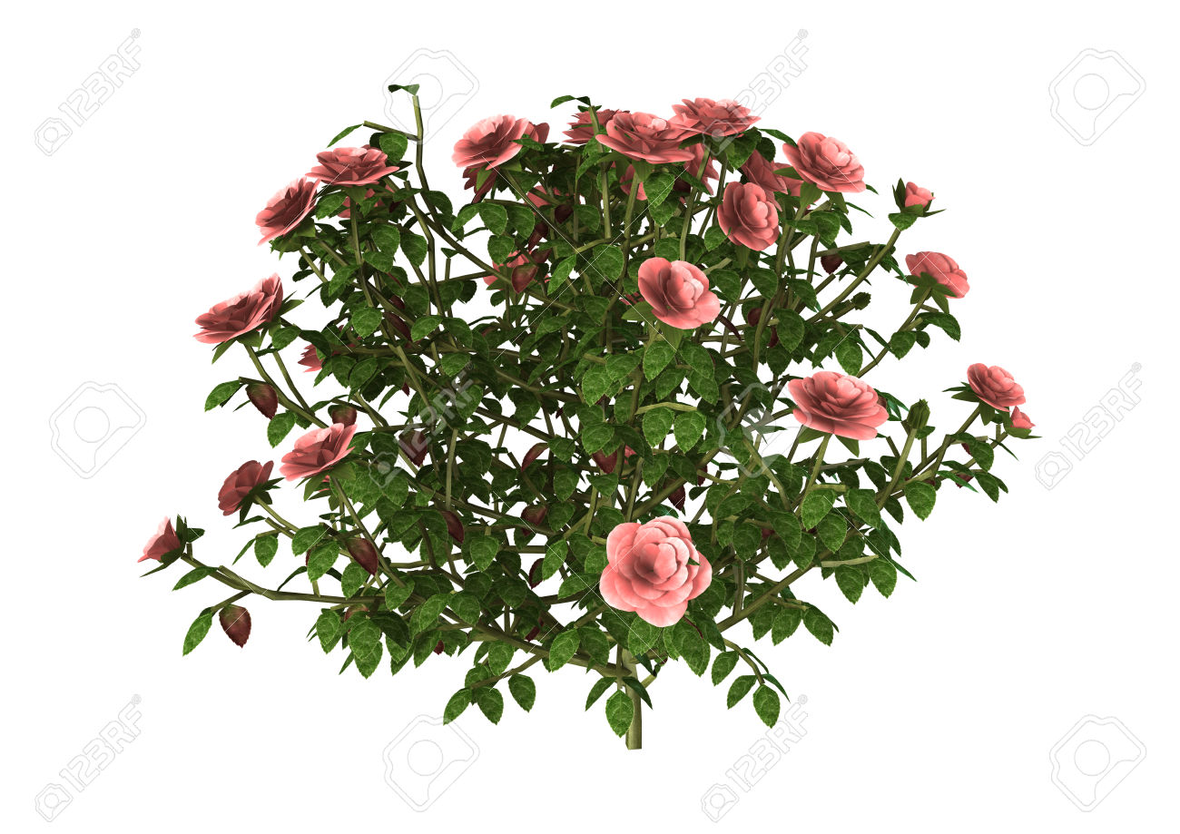 3d rose clipart live.