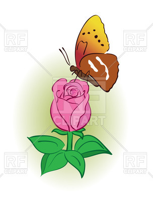 Beautiful pink rose with butterfly Vector Image #66431.