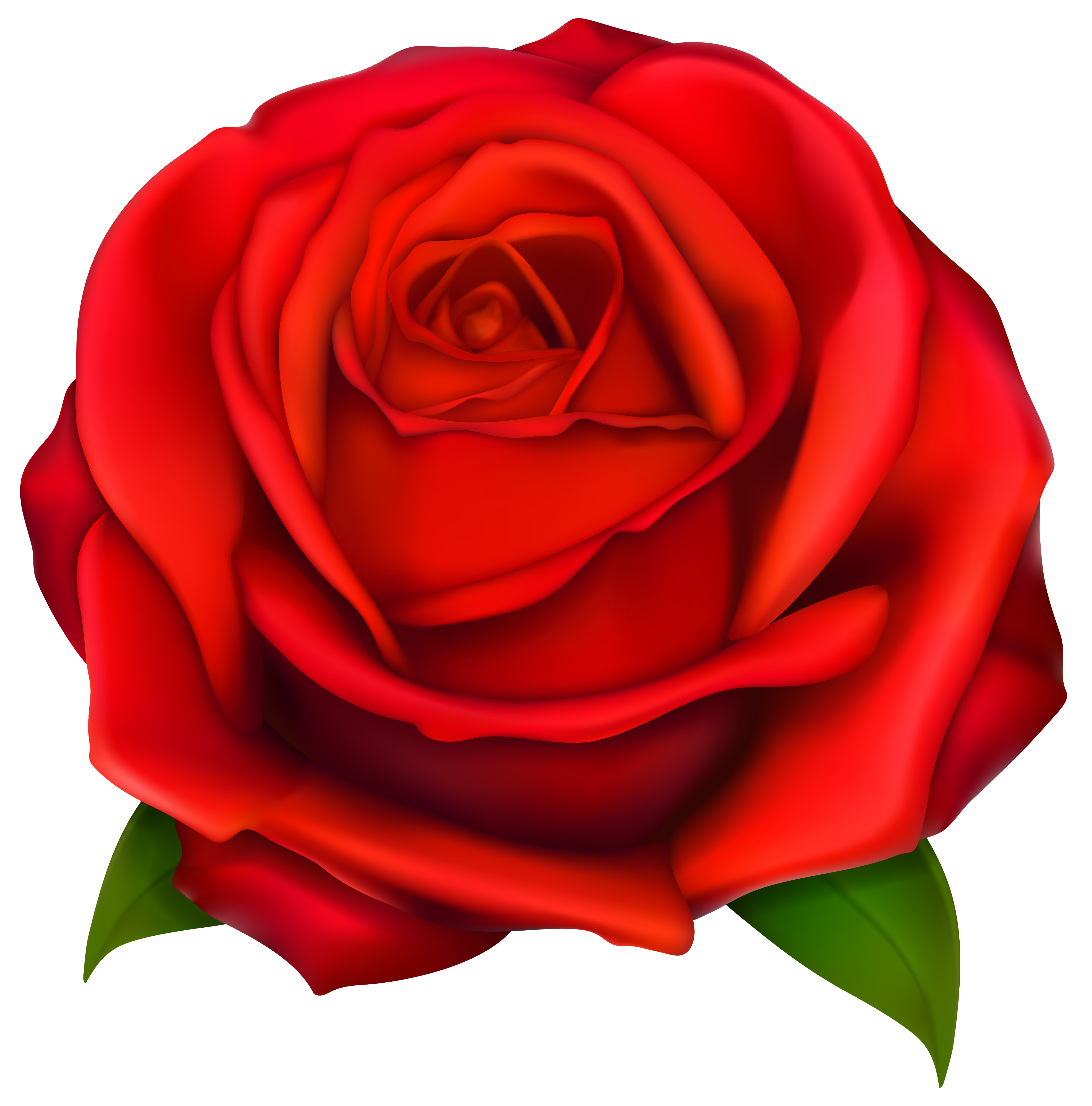 Image of clip art red rose 2 red roses clip art images free.