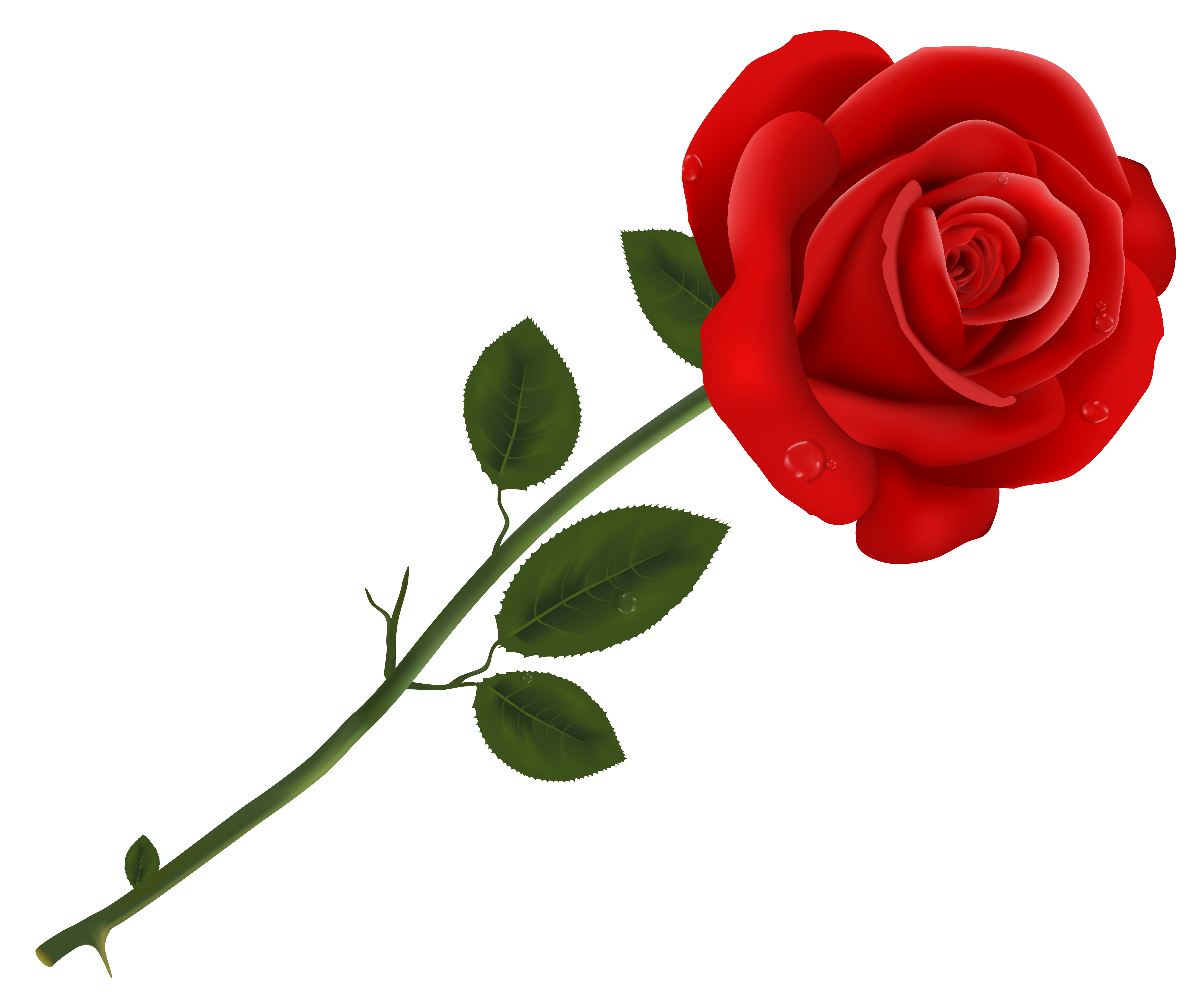 Red Rose Transparent PNG Clipart.