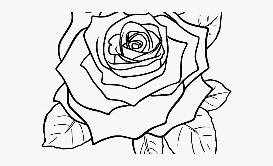 White Rose Clipart Guldasta.