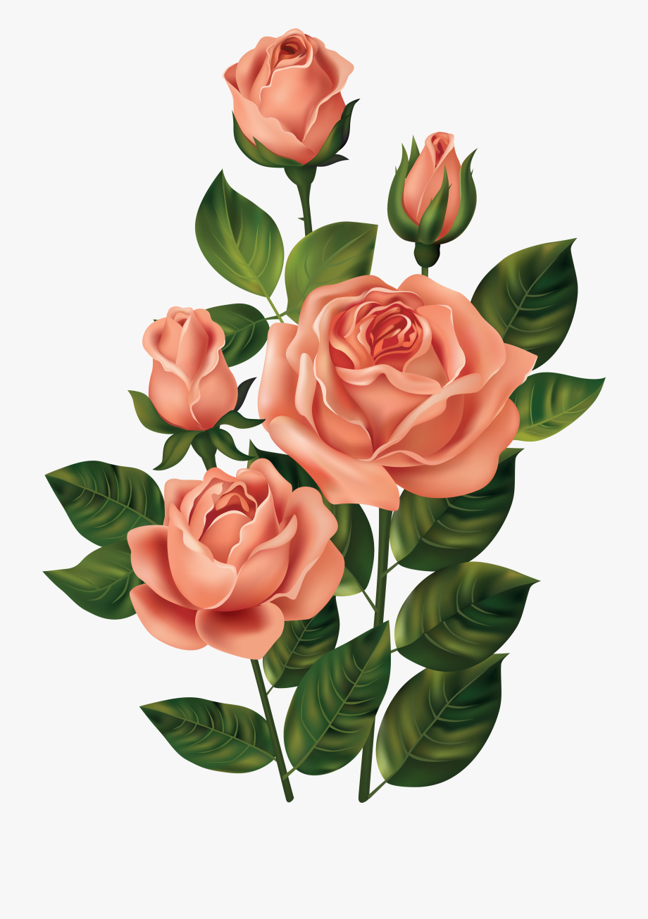 Rose Clipart, Flower Clipart, Rose Pictures, Art Pictures.