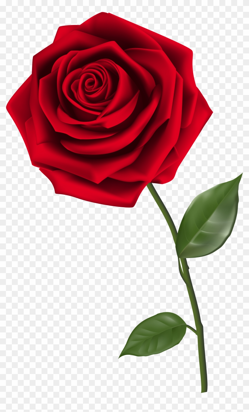 Single Red Rose Png.