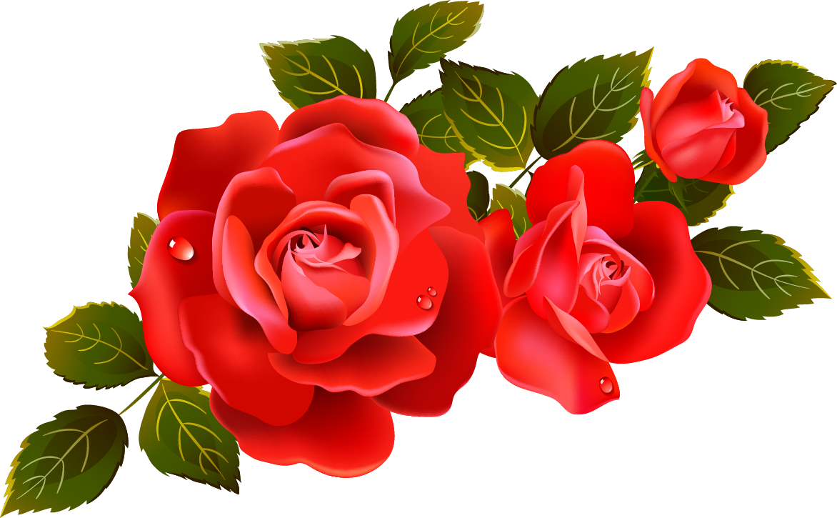 Free Red Rose Vector from a set. Description from pinterest.