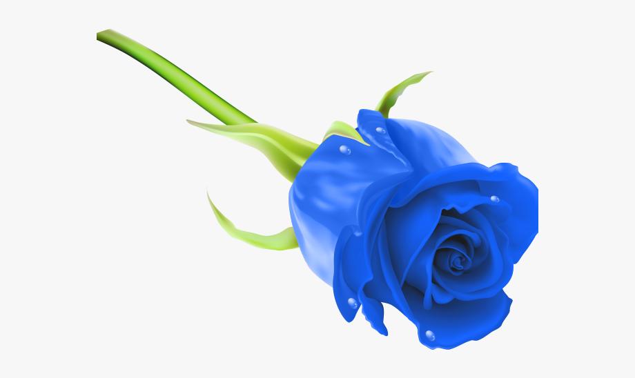 Blue Rose Clipart Royal Blue Flower.