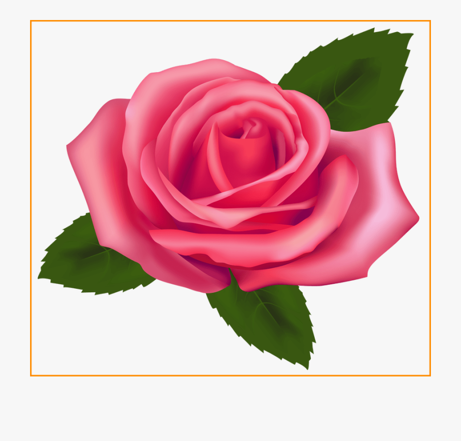 Marvelous Pink Rose Png Clipart Best Web Pics Of A.