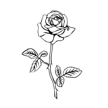 Rose clipart outline 5 » Clipart Station.