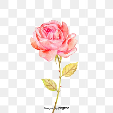 Rose Clipart, Download Free Transparent PNG Format Clipart.