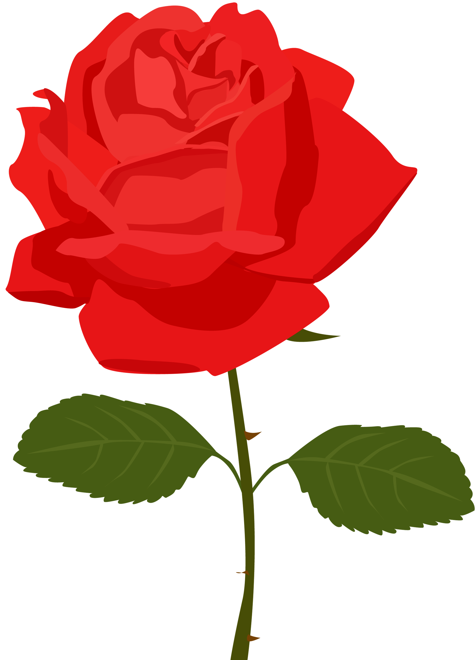 Transparent Red Rose PNG Picture.