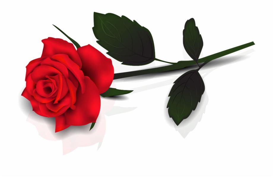 Single Red Rose Transparent Png.