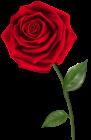 Roses PNG.